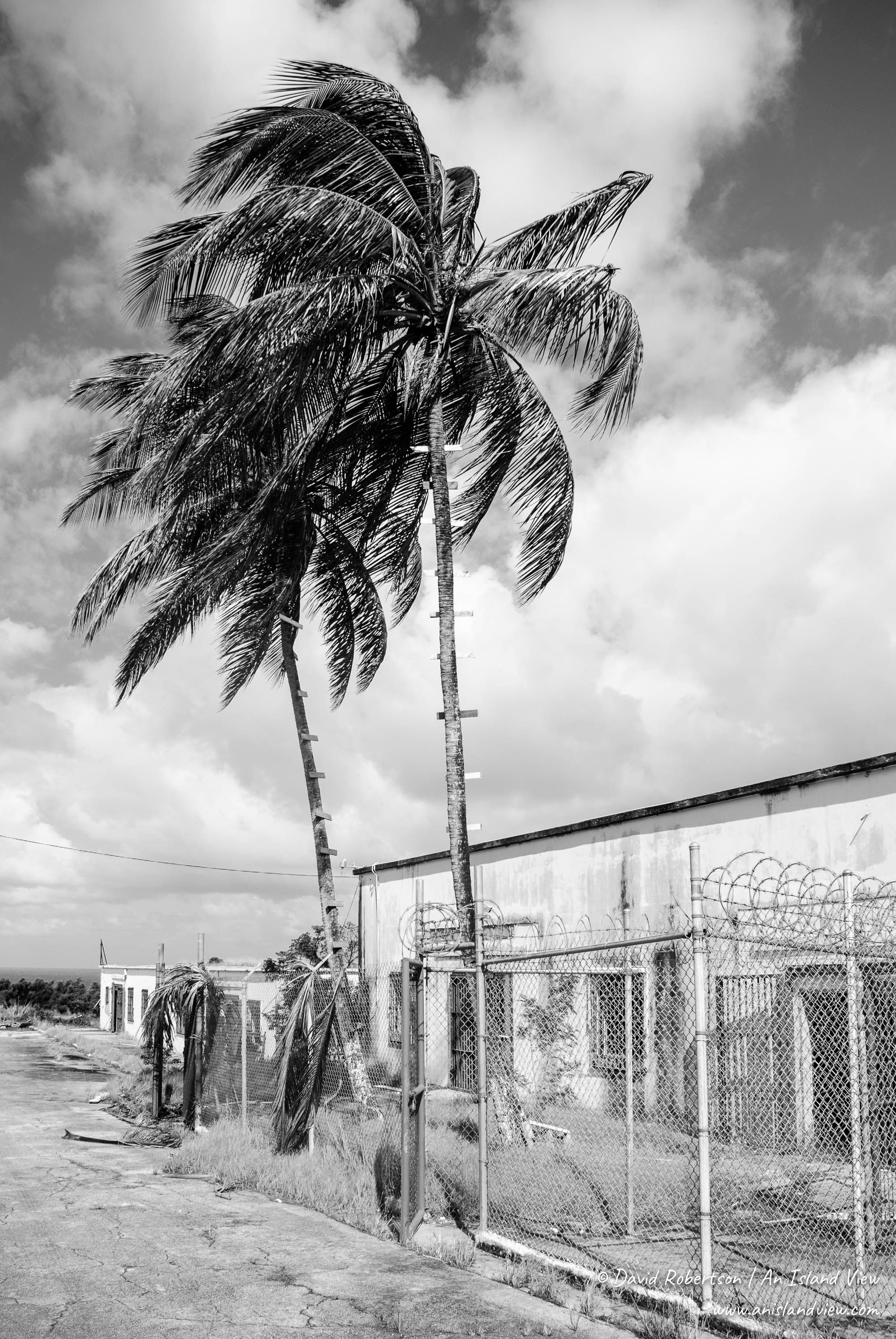 Prison buildings and palm trees.