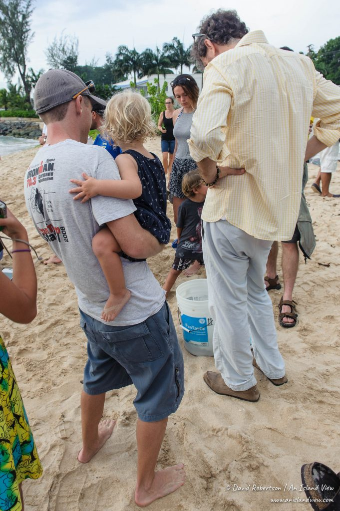 Crowd admiring the baby turtles.