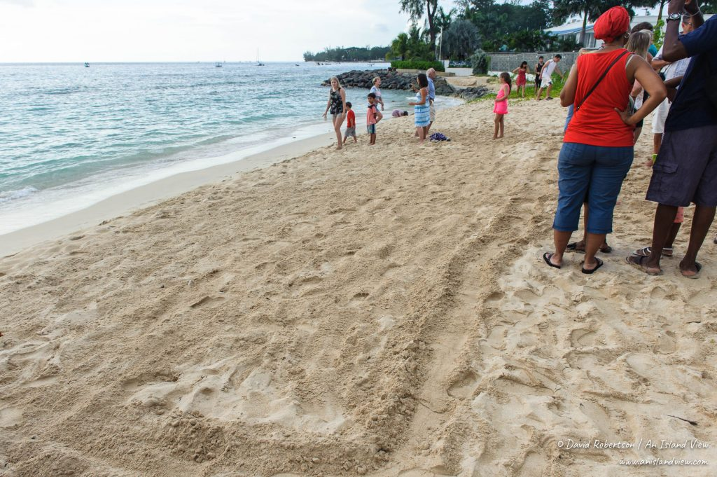 Sandy beach for turtle release.