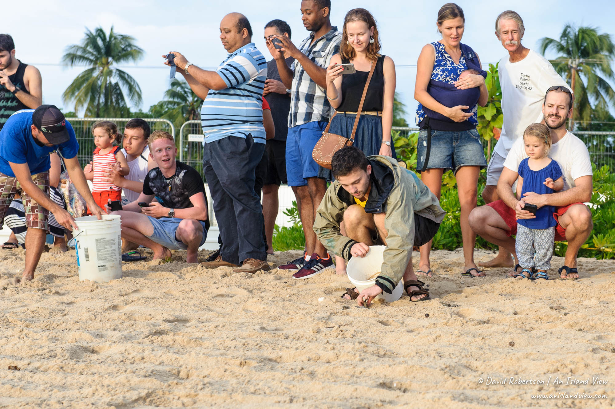 Turtle release in Barbados.
