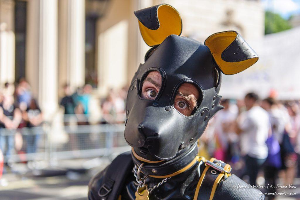 Leather animal.